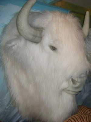 Buffalo Head - White (Furry) (JR 2075-W)
