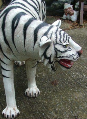 Tiger Life Size White Jr 1856 W The Jolly Roger