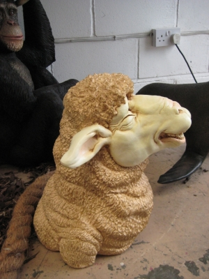 Merino Sheep Head 1 (JR 110044)