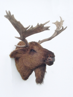 Moose head furry jr 2076 the jolly roger life size 3d models resin figures - Fake moose head mount ...