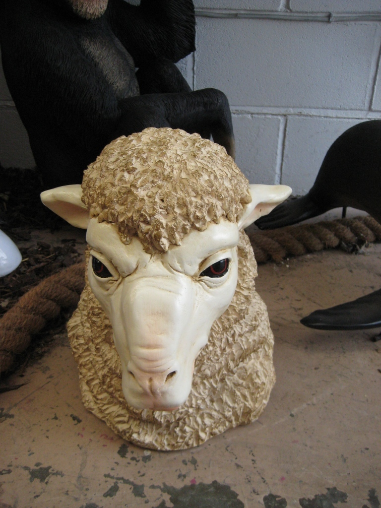 Displaying 19> Images For - Sheep Head...