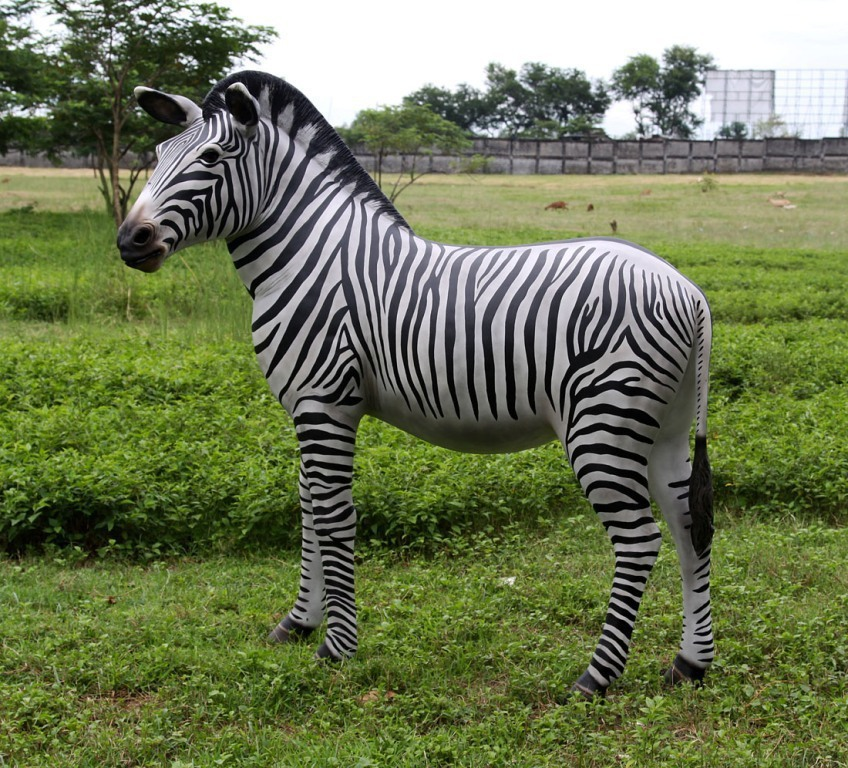 This is a wonderful life-size model of a Zebra, it is ideal to use in ... Zebra Weight