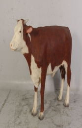 Hereford Steer (JR 080125)