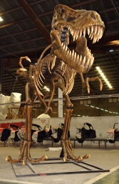T Rex Skeleton (JR 2602)