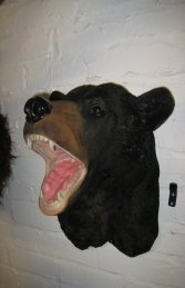 Black Bear Head (JR DD88140A)