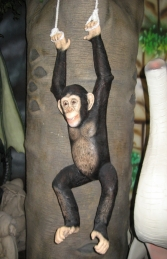 Chimpanzee Hanging (JR 120040)