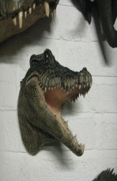 Crocodile Head (JR DD88106A)