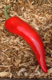 Chili Pepper- Red 73cm (JR 2479-a)