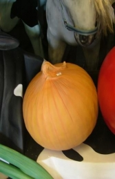 Onion 1.5ft (JR 2529)