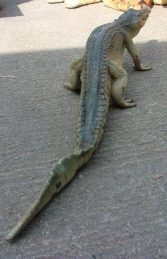 Crocodile Walking 4ft long (JR 080112)