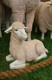 Merino Lamb - Lying (JR 020502) - Thumbnail 01