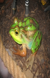 Green and Golden Bell Frog (JR 100003)