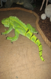 Iguana 3ft long (JR 2160) - Thumbnail 02