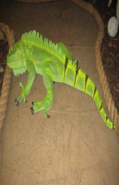 Iguana 3ft long (JR 2160)
