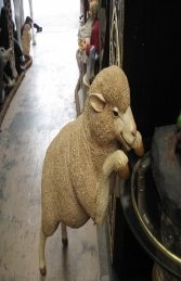 Merino Sheep - Curious (JR 110047)