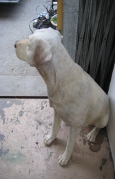 Labrador sitting - Yellow (JR 110098y) - Thumbnail 03