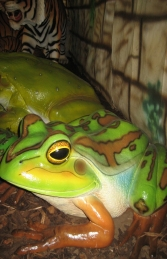 Green and Golden Bell Frog - Giant (JR 100017) - Thumbnail 02