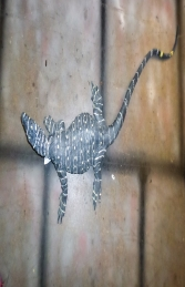 Lace Monitor Lizard 4ft (JR 080113)