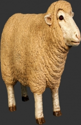 Merino Sheep head up - Small (JR 110126)