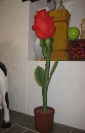 Rose 6ft (JR 2337)