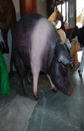Pig - Saddleback (JR 120073SB) - Thumbnail 01