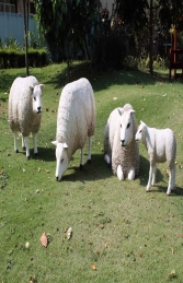 Texelaar Sheep Flock (JR Flock) - Thumbnail 02