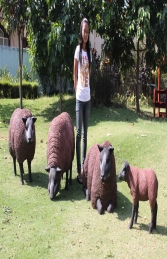Texelaar Sheep Brown Flock (JR Flockb) - Thumbnail 01