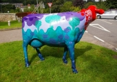 JACKS COWS - ON DISPLAY