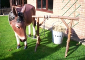 TOMMY THE DONKEY