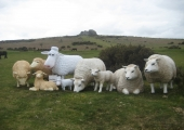 OUR SHEEP FAMILY