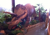 TRICERATOPS IN TORQUAY