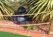 JUNGLE ADVENTURE GOLF - TORQUAY